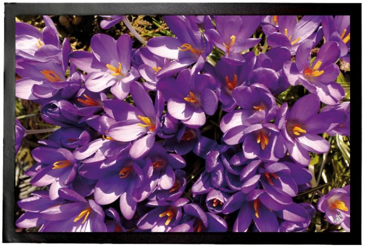 60x40cm Lila Krokus Blüten Fußmatte Türmatte Blumen #94421